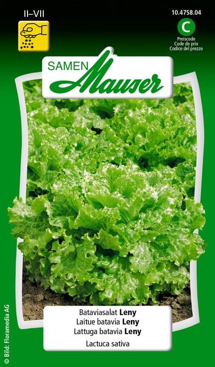 Bataviasalat Leny Samen Mauser 650108801000 Inhalt 0.15 g (ca. 80  Pflanzen oder 6 - 10 m² ) Bild Nr. 1
