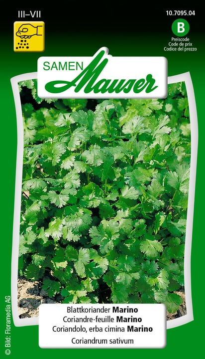 Blattkoriander Marino Saat Samen Mauser 650119901000 Inhalt 3 g (ca. 300 Pflanzen oder 4-6 m² ) Bild Nr. 1