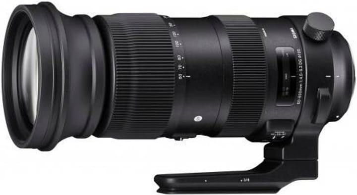 60-600mm f / 4.5-6.3 DG OS HSM Sports Nikon Sigma 785300145188 Photo no. 1