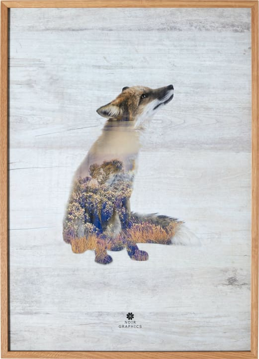 FOX Quadro incorniciato 431834100000 N. figura 1