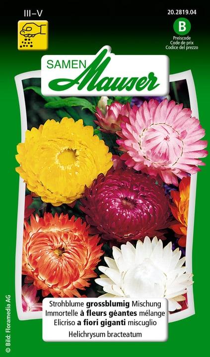 Strohblume grossblumige Mischung Samen Mauser 650117001000 Inhalt 0.5 g (50 - 70 Pflanzen oder 4 - 5 m² ) Bild Nr. 1