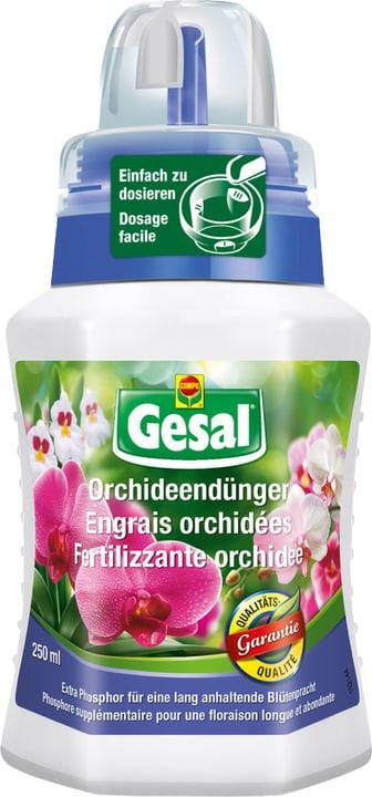 Orchideendünger, 250 ml Compo 658223900000