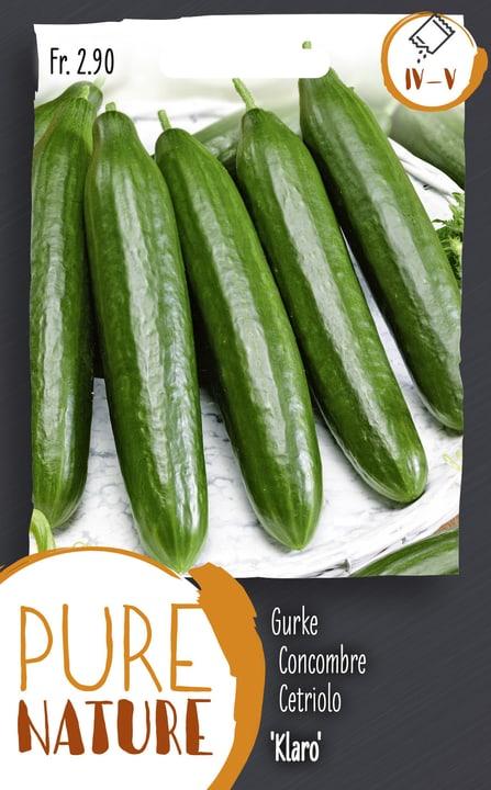 Concombre 'Klaro' 1g Semences de legumes Do it + Garden 287116300000 Photo no. 1