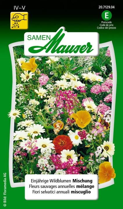 Einjährige Wildblumen Mischung Saat Samen Mauser 650108201000 Inhalt 2.5 g (ca. 150 Pflanzen oder 4 m²) Bild Nr. 1