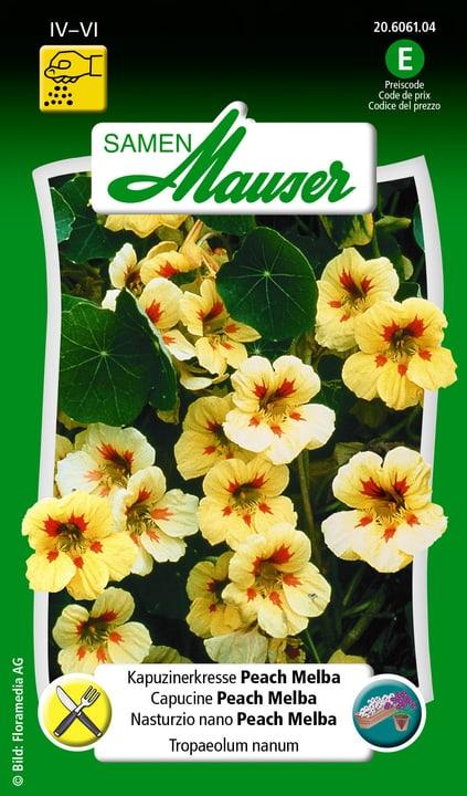 Capucine Peach Melba Samen Mauser 650107806000 Contenu 5 g (env. 25 plantes ou 3 m²) Photo no. 1