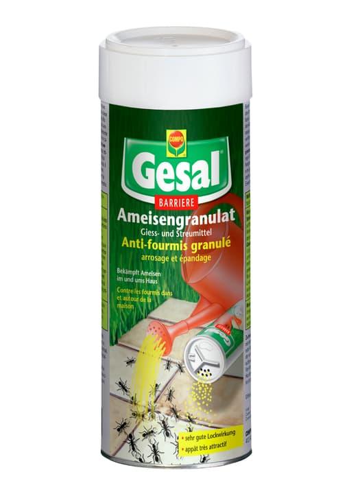 Ameisengranulat, 300 g Compo Gesal 658507700000 Bild Nr. 1