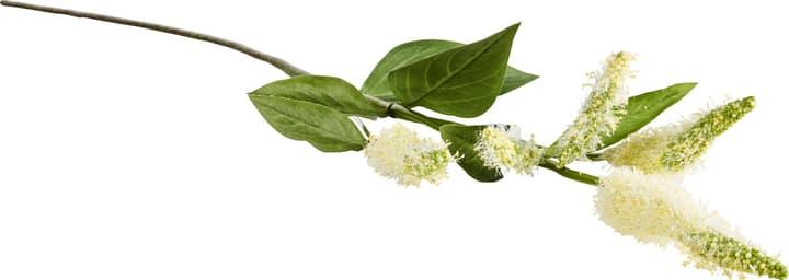 LOOSESTRIFE Fleur artificielle 440728000000 N. figura 1