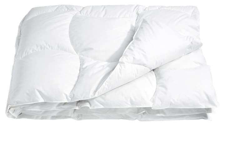 DELUXE STANDARD Couette 451738512710 Couleur Blanc Dimensions L: 240.0 cm x P: 240.0 cm Photo no. 1