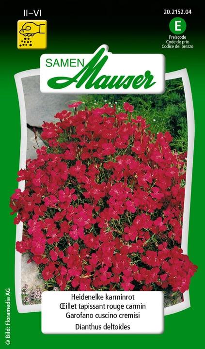 Oeillet tapissant rouge carmin Samen Mauser 650103105000 Contenu 0.5 g (env. 400  plantes ou 4 - 5 m²) Photo no. 1
