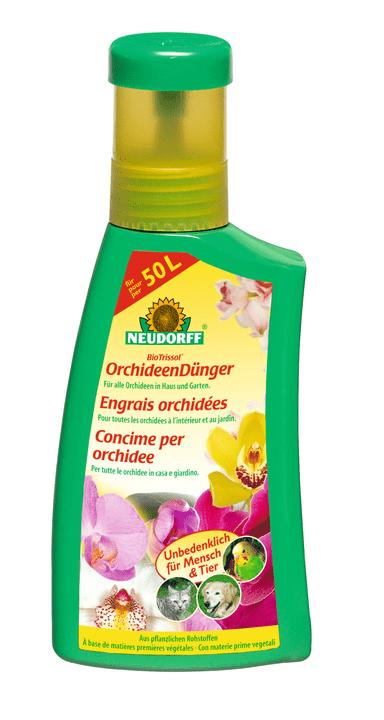 ENGRAIS ORCHIDEES, 250 ml Neudorff 658234500000 Photo no. 1