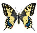 Malgonia