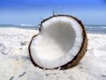 coconutvanilla