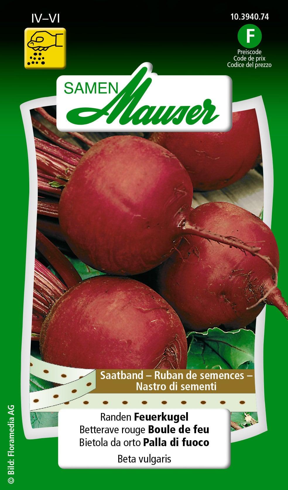 Samen Mauser Ruban de semences betterave rouge Boule de Feu Semence