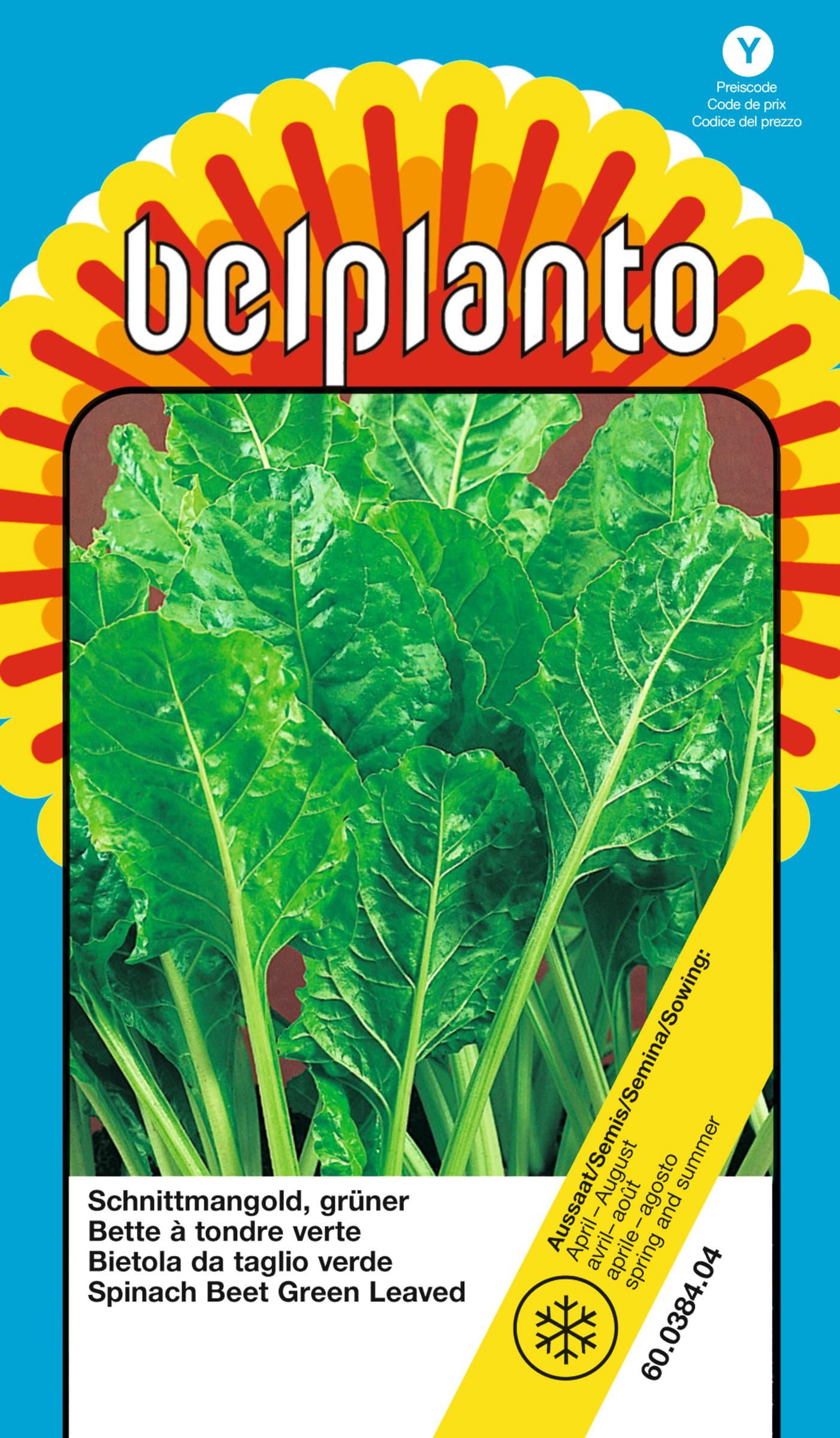 Samen Mauser Bietola da taglio verde Semente