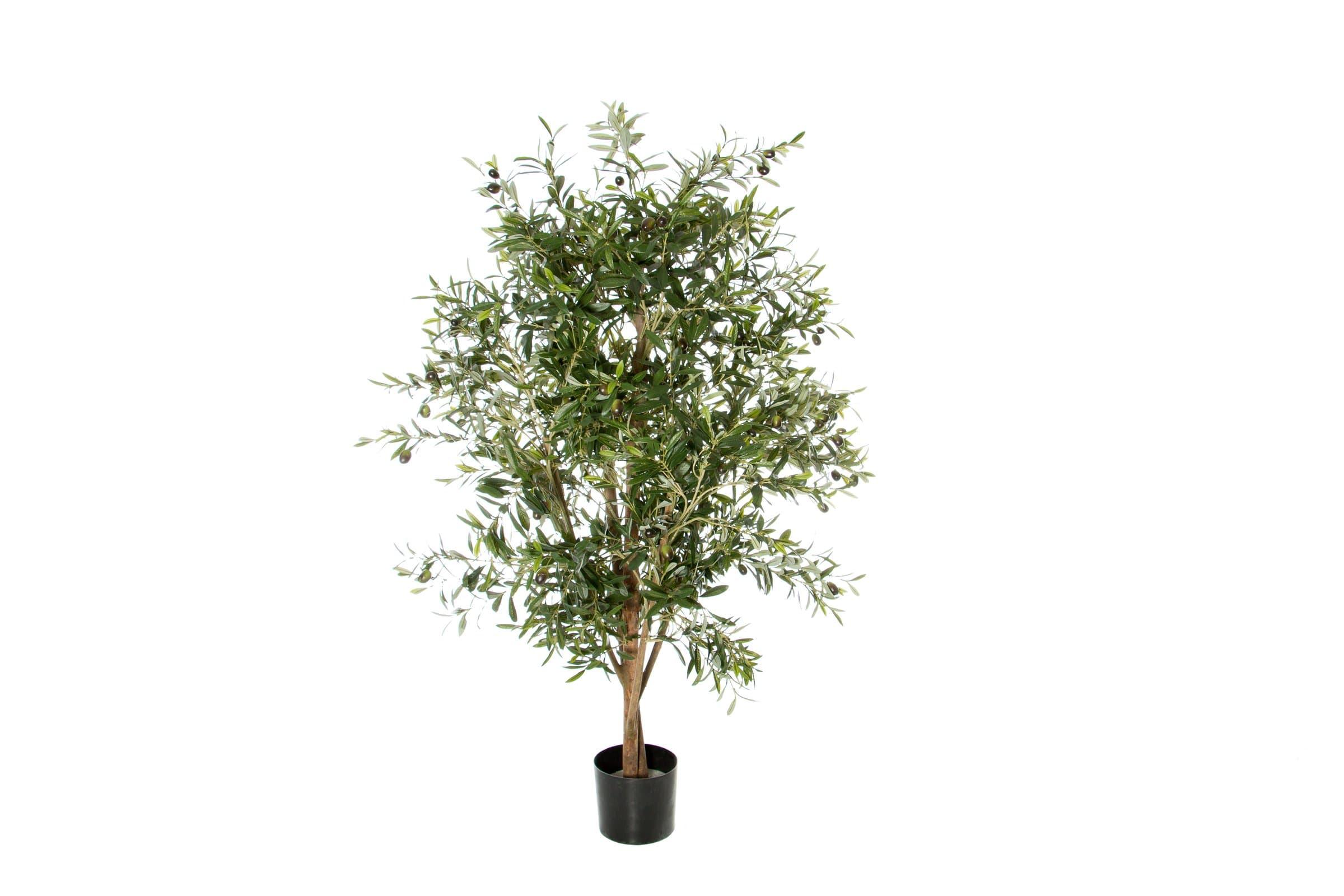 olivenbaum mit fr chten migros. Black Bedroom Furniture Sets. Home Design Ideas