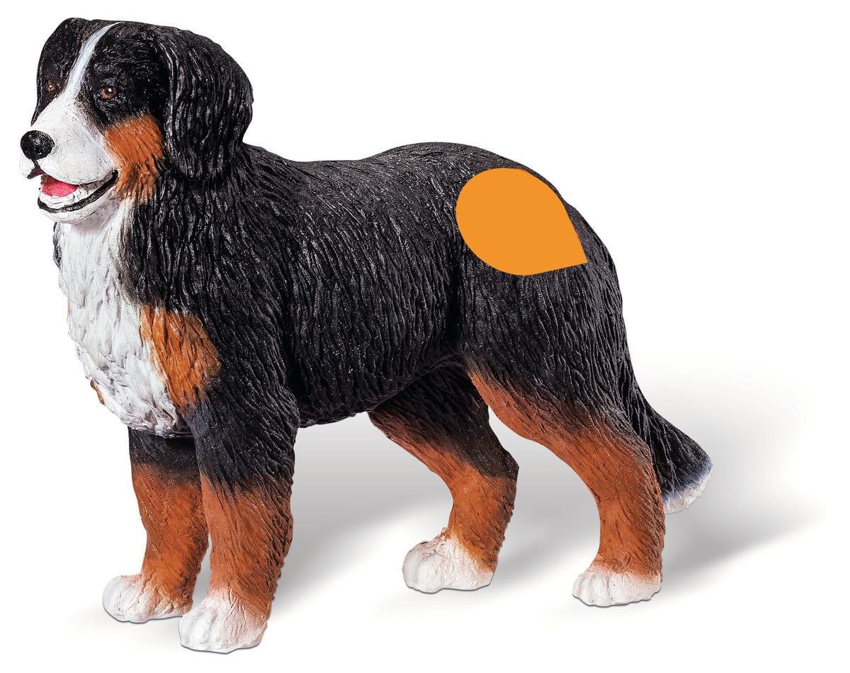 Tiptoi Berner Sennenhund (D)