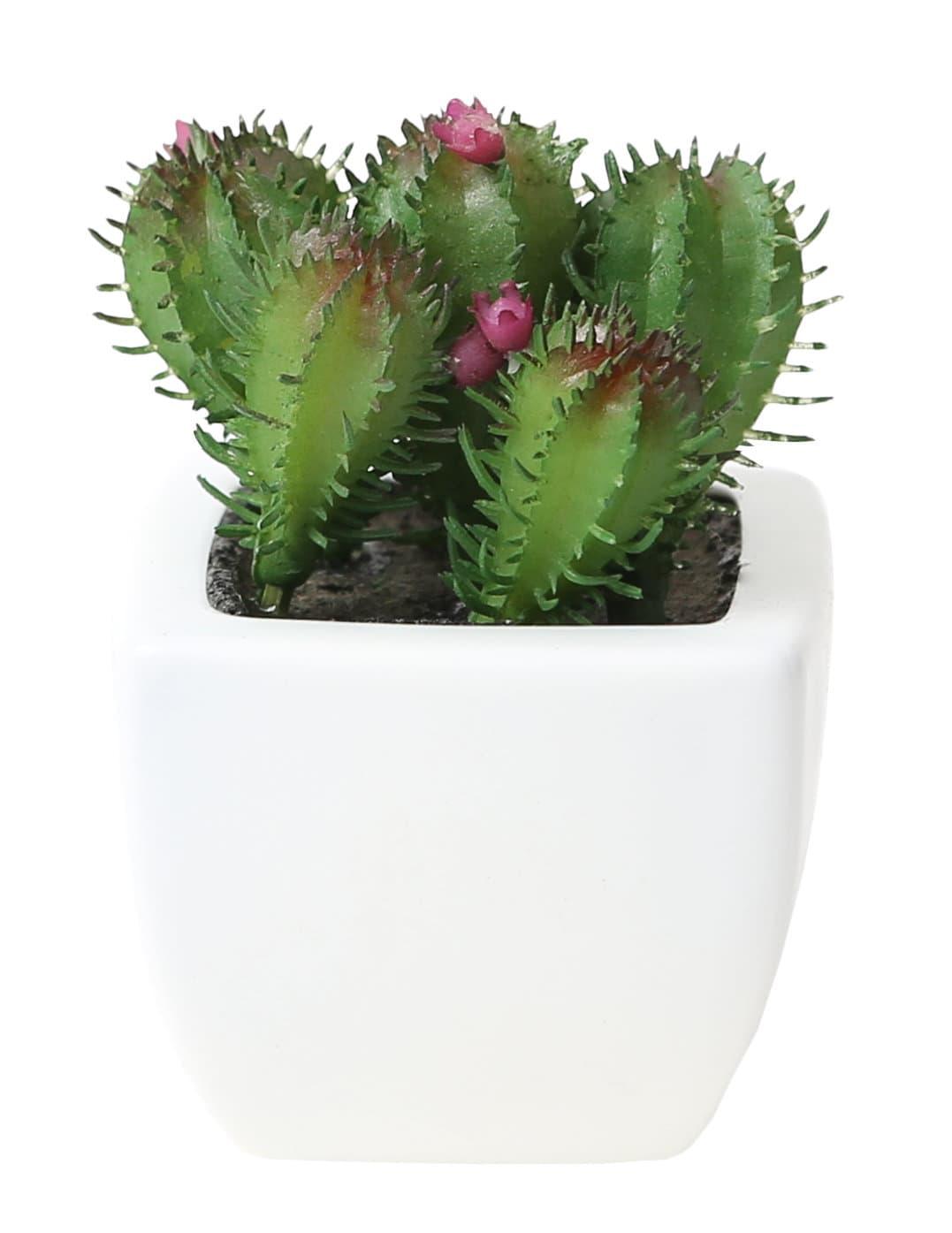 do it garden art cactus mini ii en pot migros. Black Bedroom Furniture Sets. Home Design Ideas