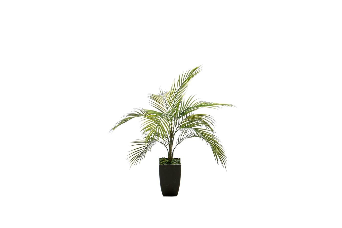 do it garden areca palmier migros. Black Bedroom Furniture Sets. Home Design Ideas