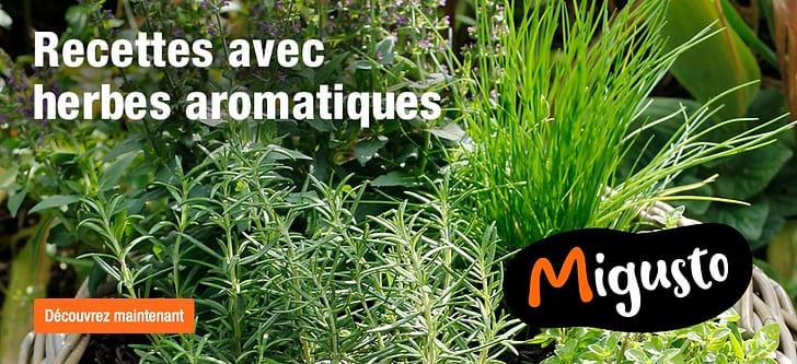 Recettes avec herbes aromatiques du Migusto